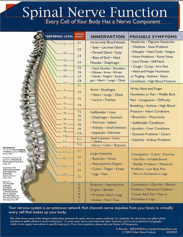 spinal-nerve-function.jpg